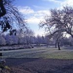 Minstrel Court Wedding - the garden in winter