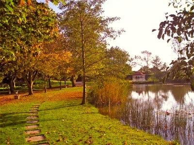 Minstrel Court Wedding - the maples in autumn